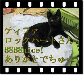 szX7IKsC.jpg